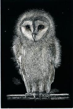 Fine Art Print from Scraperboard - Barn Owl Baby