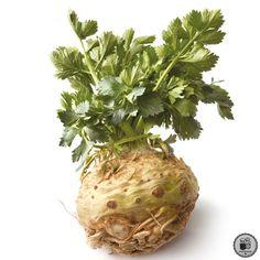 Post on Tumblr Celerie Rave, Onion, Cabbage, Coconut, Canning, Vegetables, Food, Prague, Fresh