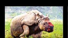 Sign the Petition Animal Help, Animal 2, Trophy Hunting, Live Animals, Stop Animal Cruelty, Sad Stories, Rhinos, Together We Can, Animal Welfare