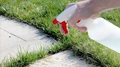 Safe weed killer! Use plain white vinegar. It's cheap, and mixed with salt (epsom salt is the cheapest) plus dish detergent to make it stick (any kind) it makes an effective spray that kills weeds pretty quickly. Be careful, because it will kill the plants you like, too, if they get sprayed. I generally use this on stone walkways and sidewalks where the weeds come up in between. Proportions: 1 gallon distilled white vinegar 2 cups salt 1/4 cup dish soap OR in a large spray bottle: 1/4 cup…