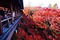 東福寺通天橋 ~京都の紅葉 Tofukuji Temple,Kyoto