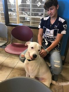 In Houston, Texas, a young owner was forced to surrender his dog to the Harris County Animal Shelter. No one really knows the entire story, but the unfair pit bull restrictions play a major role into this tragic situation – how many landlords refuse to allow any of bully breeds?  For five years, this young …
