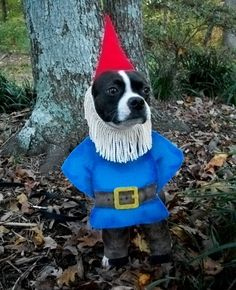 (This one could easily be made from cloth, instead of cardboard or whatever) 22 Funny Dog Costumes for Halloween via Brit + Co.