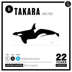 Takara, orca, has been in captivity for 22 years of her life. Her baby Trua is at SeaWorld Orlando where Dawn Brancheau was killed by Tilikum.