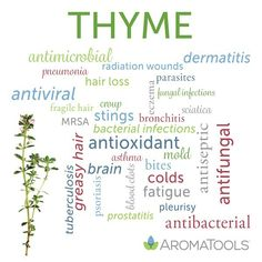 AromaTools Blog Thyme Essential Oil Uses, Essential Oils For Skin, Therapeutic Grade Essential Oils, Young Living Essential Oils, Essential Oil Blends, Thyme Benefits, Best Oils, Healing Herbs, Doterra Essential Oils