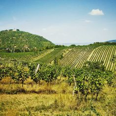 Vineyards in Vienna, Leopoldsberg/Kahlenberg Street Photography, Travel Photography, Danube River, Imperial Palace, Travel Information, Vienna, Austria, Vineyard, Knowledge