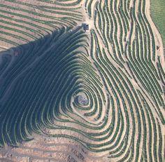 construir a vinha  douro vinhateiro - fingerprint of #douro #wine