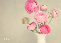 """Our group of 15 women from the The Bloom Forum has been continuing our creative journey.This week's theme was """"vintage"""". Although I have a hundred things around my home that could qualify, I chose to photograph flowers. Nothing says vintage to me more than the old-fashioned elegance of pink…"""