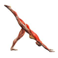 Downward-facing dog pose, right leg up - Adho Mukha Svanasana plus right - Yoga Poses