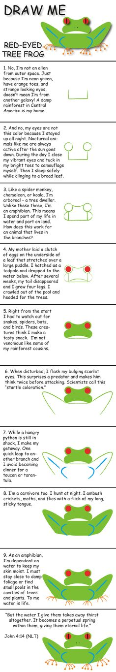 Draw a red-eyed tree frog in 10 easy steps and learn fun facts about its life. © 2013 Marty Nystrom
