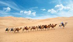 Wüste Gobi Camel, Animals, Mongolia, Buddhism, Round Trip, Destinations, Landscape, Viajes, Animales