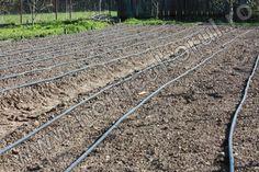 Irigarea legumelor prin picurare_gradina_1 Railroad Tracks, Solar, Gardening, Garten, Lawn And Garden, Garden, Train Tracks, Square Foot Gardening, Garden Care
