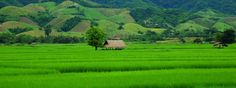 Bali doesn't have the monopoly on green rice paddies. See for yourself at the Zuna Yoga teacher training in Kep, Cambodia. http://www.zunayoga.com/travel-cambodia.html