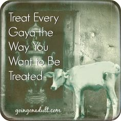 Treat Every Gaya the Way You Want to Be Treated | http://www.goingonadult.com/2014/06/veneration-of-the-sacred-gaya.html