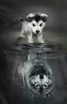 I'm sure this is what my 2 think of themselves also wolves yep