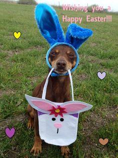 Easter Dog 3