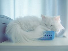 Photo Having a nap by harrynavy on 500px