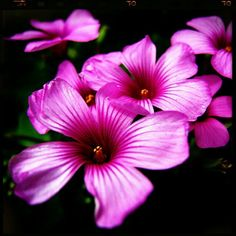 お早うございます。今日もたくさんの花とたくさんの笑顔が咲きますように。
