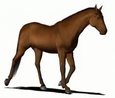The perfect Horse Animal Walk Animated GIF for your conversation. Discover and Share the best GIFs on Tenor. Walking Gif, Walking Horse, Horse Pictures, Moving Pictures, Horse Animation, Running Gif, Run Cycle, Interactive Art, Beautiful Horses