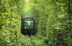 Rail Tree Tunnel, Ukraine