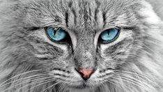 Min pokersida Animals and Pet Supplies - Pet Supplies .- Min pokersida Tiere und Heimtierbedarf – … Min pokersida Animals and Pet Supplies – - Cute Animal Names, Most Popular Cat Breeds, Animals And Pets, Cute Animals, Mr Cat, Cat Crying, Son Chat, Carlin, Types Of Cats