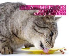11 alimentos que seu gato NÃO pode comer!