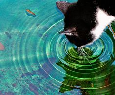 AH Delicioso!!! by bahketni, via Flickr - a cat ripple effect