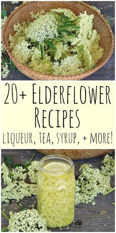 20 Elderflower Recipes: cordial liqueur tea jelly cake more! When elderflowers are in season make these great elderflower recipes! Includes recipes for elderflower cordial liqueur tea jelly cake and more! Edible Plants, Edible Flowers, Healing Herbs, Medicinal Herbs, Elderflower Cordial, Elderflower Syrup Recipe, Elderberry Recipes, Flower Food, Herbal Medicine