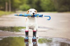 Puppies and puddles. These are a few of our favourite things!