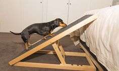 Protect your dachshund back with our DachRamp, a pet ramp with adjustable heights. Sausage Dog Central exclusively offers this portable, unique ramp worldwide.