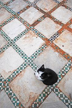 Cat in the courtyard of Bahia building, Marrakech | by Giorgio Mercuri