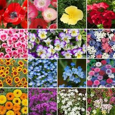 Shop for Low Grow Wildflower Seed Mix by the Ounce or by the Pound.Com offers Hundreds of Seed Varieties, Including the Finest and Freshest Wildflower Seed Mixes Anywhere. Johnny Jump Up, California Poppy, Wildflower Seeds, Evening Primrose, Growing Flowers, Growing Plants, Colorful Garden, Bees Knees, Planting Seeds