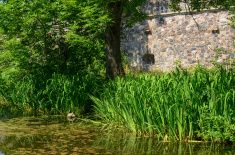 Pond and stone wall stock photo
