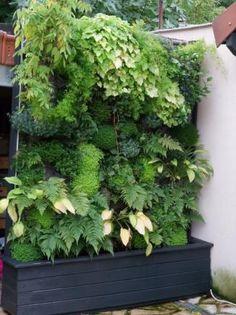 Mur végétal standard de 2 m2, adapté pour des appartements de petite surface.
