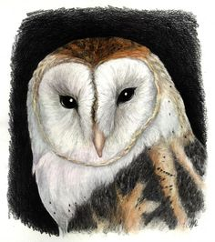 Done for Digital Painting Class Reference used, but I can't link back to it. Owl on a Mystical Night Glossy Eyes, Owl House, Downy, Canvas Prints, Art Prints, Photo Canvas, White Ink, Mystic, My Arts