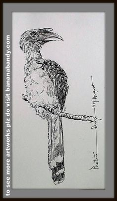 BIRDS ON MONOCHROME -2 ... BLACK GELPEN AND PENCIL ON IVORY PAPERBOARD.. GREY HORNBILL ...[ REF. COURTESY: MR. SUBRATA MUKHERJEE] ...2015... The Indian grey hornbill (Ocyceros birostris) is a common hornbill found on the Indian subcontinent. It is mostly arboreal and is commonly sighted in pairs. It has grey feathers all over the body with a light grey or dull white belly. The horn is black or dark grey with a casque extending to the point of curvature of the horn. It is one of the few…