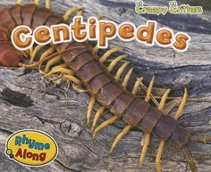 Wiggles Birthday, Bugs And Insects, Creepy, Centipedes, Books, Students, Amazon, School, Garden