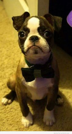 Give Me A Treat - I'm Cute!