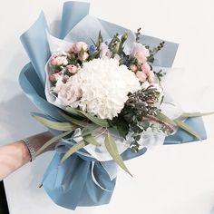Flowers / Hydrangea / Color