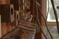 Nikon D5100 / birds