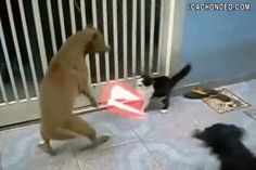 That's some really nice digital work. | The 10 Funniest Cat GIFs Of The Week