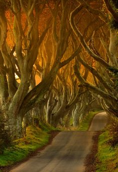 """The Dark Hedges"" - Antrim, Ireland."