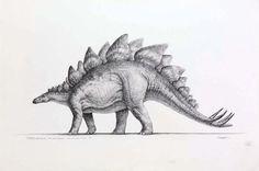 Stegosaurus - the mightiest herbivore