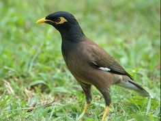 Bherjan-Borajan-Padumoni Wildlife Sanctuary - in Assam, India