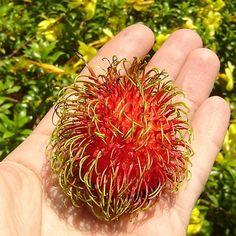 Rambutan! Thailand's BEST Fruit! – Joy's Thai Food Recipe Blog and Training for Beginners