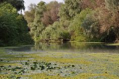 Danube Delta Danube Delta, Romania, Mountains, Nature, Pictures, Travel, Photos, Naturaleza, Viajes