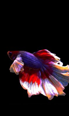Aquarium Live Wallpaper, New Live Wallpaper, Fish Wallpaper, Live Wallpapers, Beautiful Nature Wallpaper, Beautiful Gif, Animals Beautiful, Apple Watch, Fish Gif