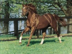 Secretariat--the greatest horse that ever lived. Triple crown winner.