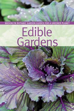 Brooklyn Botanic Garden Edible Gardens