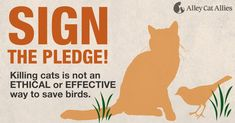 HEL STOP THE KILLING: Fight the Spread of Misinformation about Cats!  PLEASE SIGN AND SHARE!